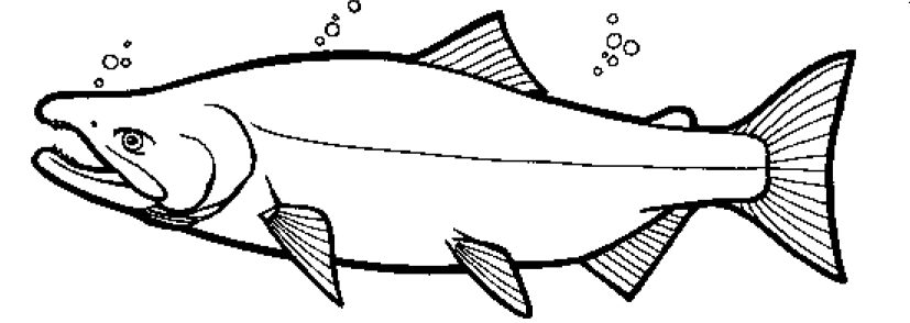 Bears Catching Salmon Coloring Pages Coloring Pages